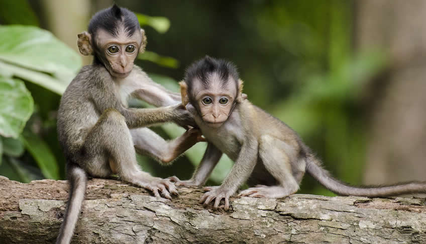 Can monkeys have autism?